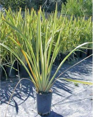 ... Dauphin à Grans en Provence, Palmiers et plantes exotiques