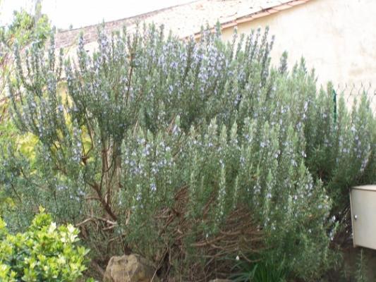 Jardinerie vente arbres et arbustes p pinieres dauphin for Vente plantes arbustes